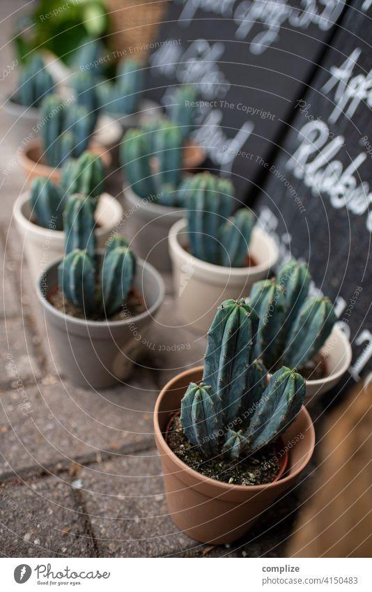 summer sun cactus Cactus sale sales booth Flower shop Vase Flowerpot cactus plant Many sign Summer Sun Plant Pot plant