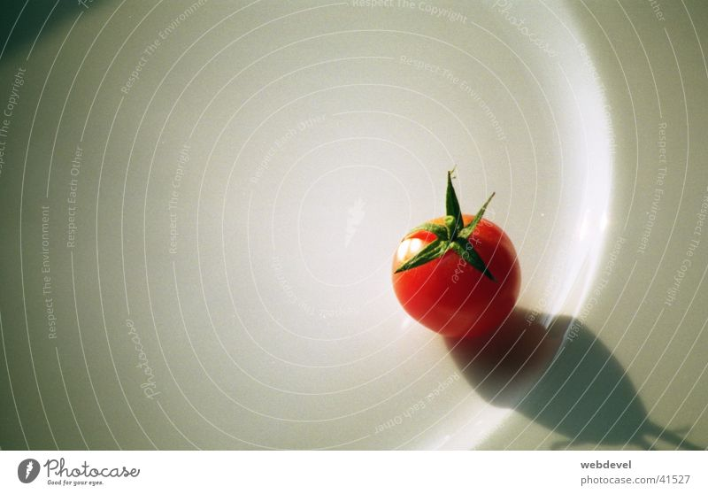 small_tomato Reddish white Still Life Nutrition Tomato Loneliness Point Close-up