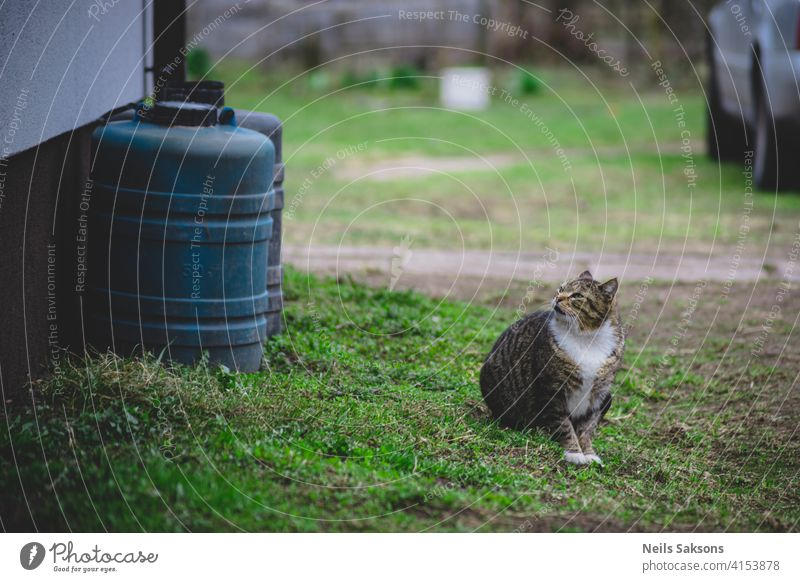 neighbour`s cat looking Animal ash attention background beautiful bokeh closeup color cute day domestic ears eyes façade face feline floor fur gray green grey