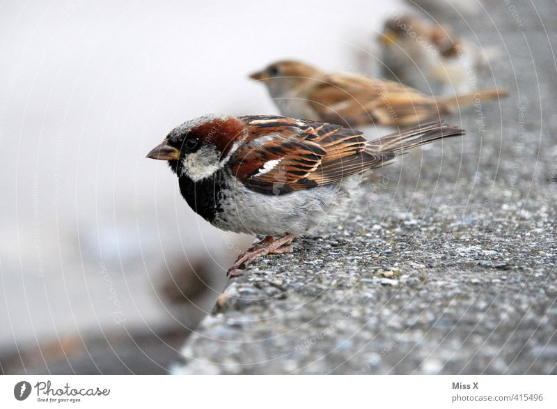 sparrow seat Animal Wild animal Bird Flock Cute Timidity Row Sparrow Finch Songbirds Wait Beak Wall (barrier) Appetite Feeding Wild bird Pair of animals