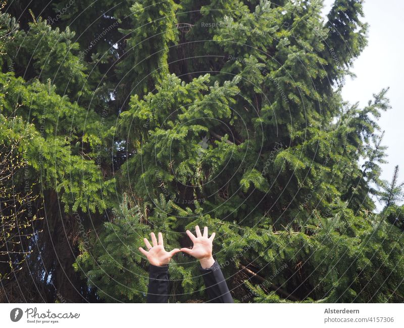 Two raised arms with outstretched hands in the lower picture with a green fir tree in the background Fingers Tree Green Sky 10 fingers hoisted Outstretched