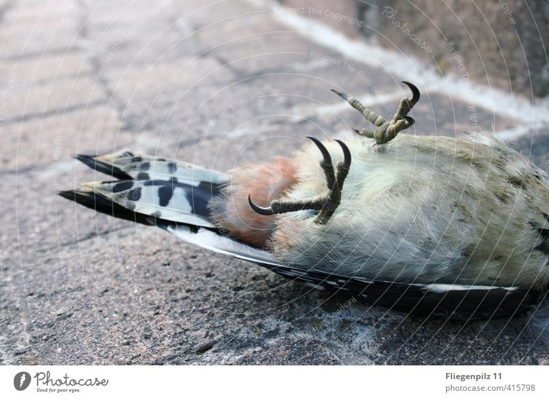 Animal Cold Death Sadness Lie Bird Wild animal Esthetic Wing End Pain Claw Dead animal Spotted woodpecker