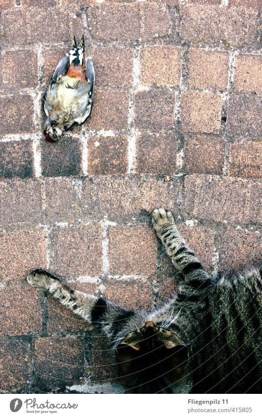 Cat Relaxation Animal Cold Death Lie Bird Power Wild Success Threat Observe Might Wing Break Pelt
