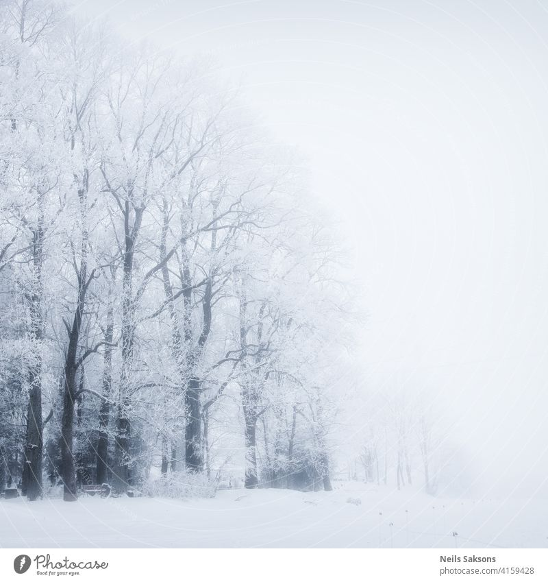 eternal beauty of trees in winter Below area bark beam birch blue bottom bright brightly clear day fading foliage forest leaf light lush mottled nature park