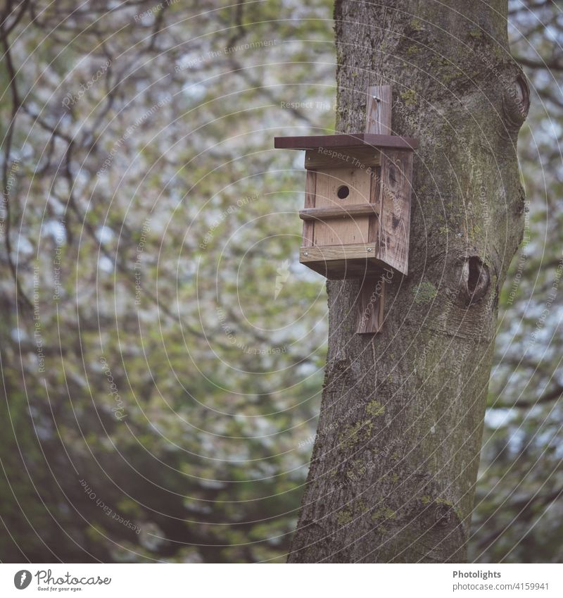 Nest box on a tree trunk Nesting box birds Bird incubate Animal Nature Exterior shot Spring Wildlife Deserted Environment Colour photo Tit mouse Flying Small