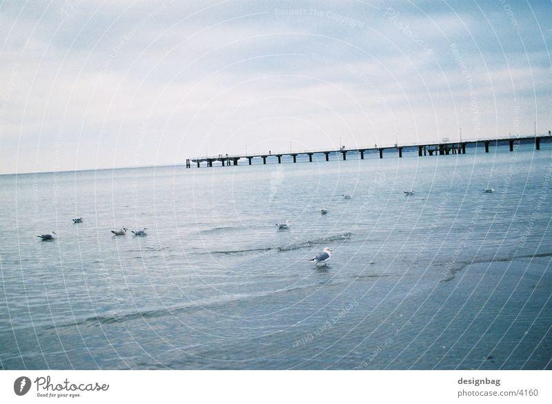 Ocean Beach Bird Europe Bridge Timmendorf beach