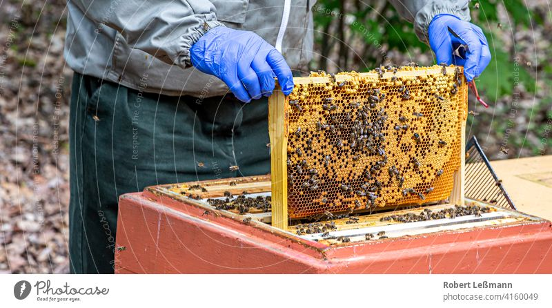 a beekeeper works with honeycombs that are full of bees Bee-keeper Honey Honeycomb Bee Box Honey bee Beehive cute frame amass Western honey bee bee hives Yellow