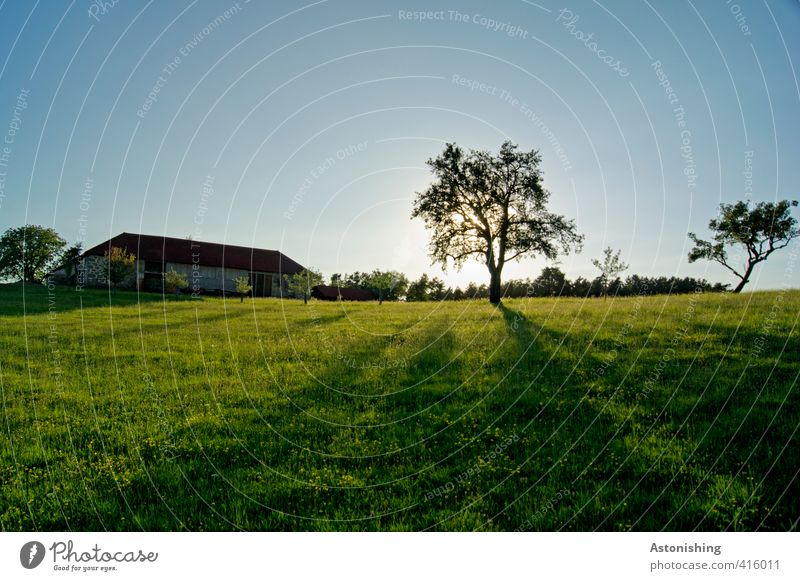 farm Environment Nature Landscape Plant Sky Cloudless sky Sun Sunrise Sunset Sunlight Summer Weather Beautiful weather Warmth Tree Grass Meadow Forest Hill