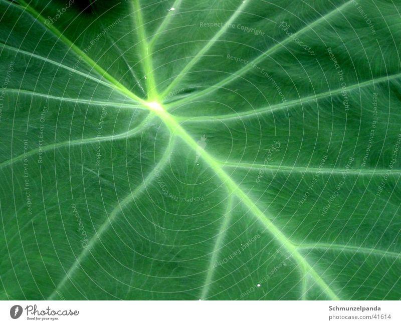 Sheet webs Leaf Green Macro (Extreme close-up) Street Botanical gardens Münster