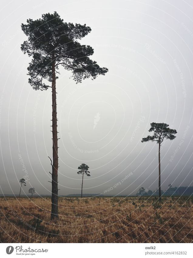 Distance types trees Little Large Tall Lonely Places gap detachment loner Nature Landschadt Forest somber Horizon Copy Space top foggy hazy overcast
