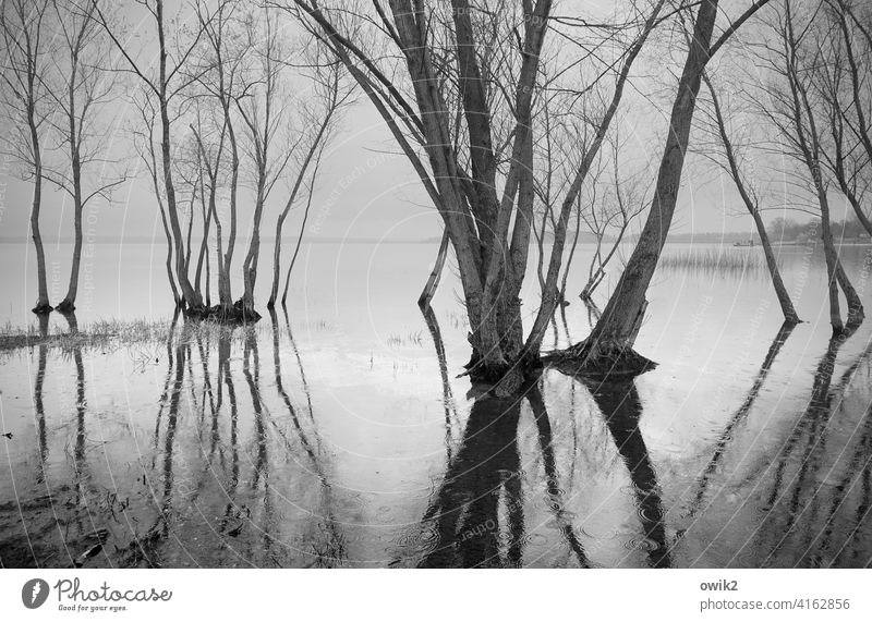 standstill trees Water land under twigs wet feet High tide flooded Deluge Reflection Surface of water Spring branches Sky Horizon Reflection in the water