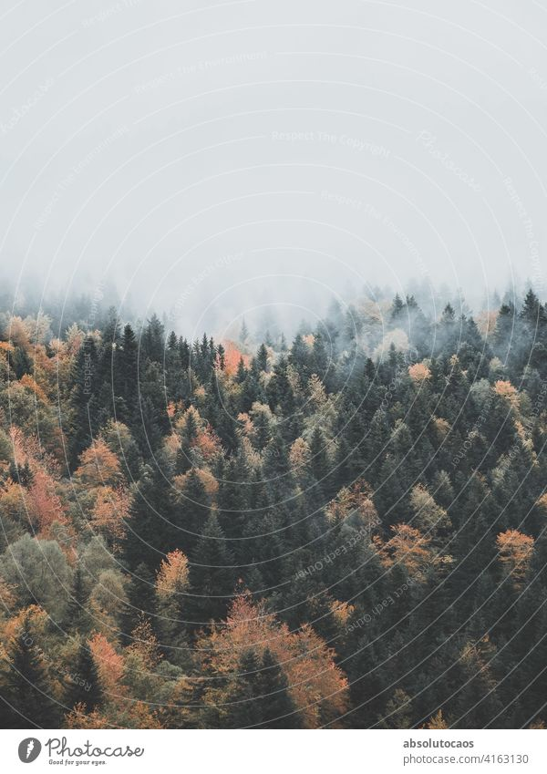 The fog goes through forest landscape nature foggy mist misty outdoor outdoors adventure scenic travel scenery weather view natural morning autumn haze park
