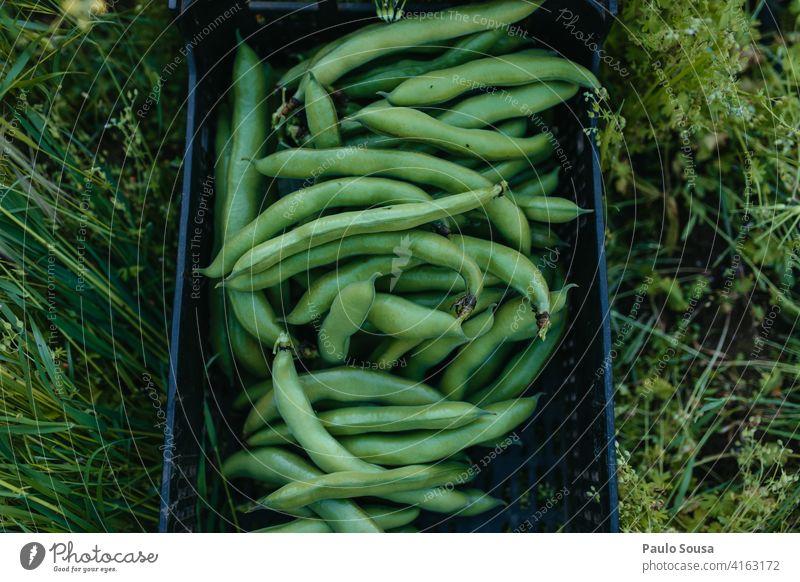 Fresh broad beans Fabaceae Faba bean Fava Bean freshness Organic produce Farm Agriculture Vegetarian diet Vegetable vegetables Healthy Beans Vegan diet