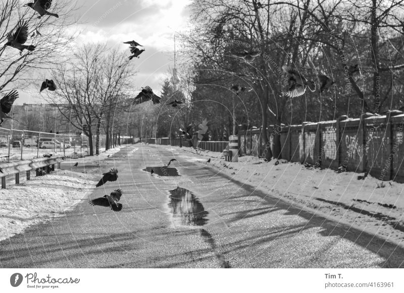 a couple of ravens fly over a lonely path with puddles. wall park Television tower Raven birds Bird Puddle Prenzlauer Berg Lanes & trails Berlin Town