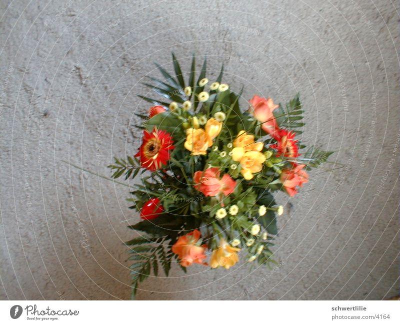in passing Flower Carpet