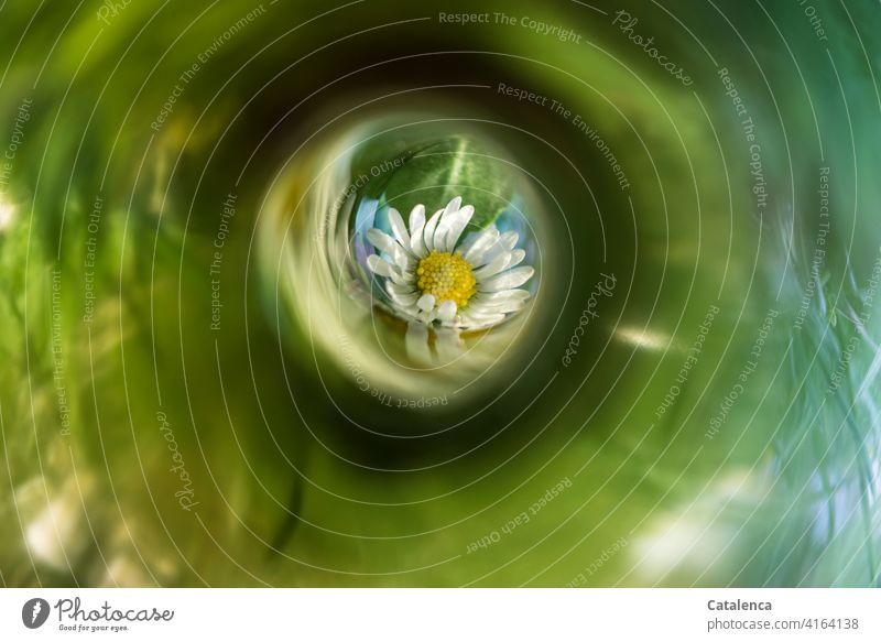 A daisy in the meadow in view Yellow Grass Green reflection Light (Natural Phenomenon) Daisy Garden Spring Day daylight wax Leaf Nature blossom blossoms Flower