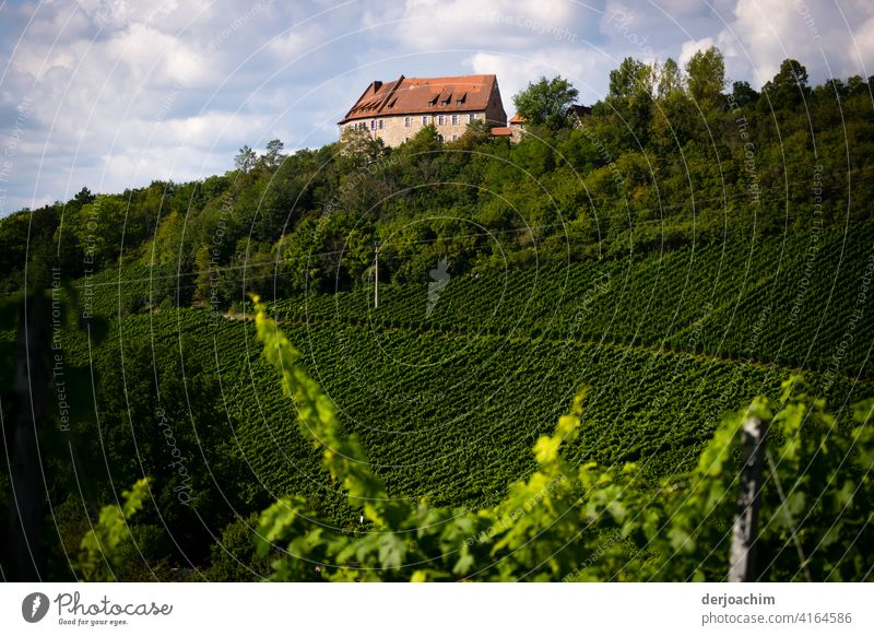 Hoheneck Castle is picturesquely situated in the middle of the Ipsheim Wine Trail in the Frankenhöhe Nature Park. Vineyard Wine growing Deserted Autumn