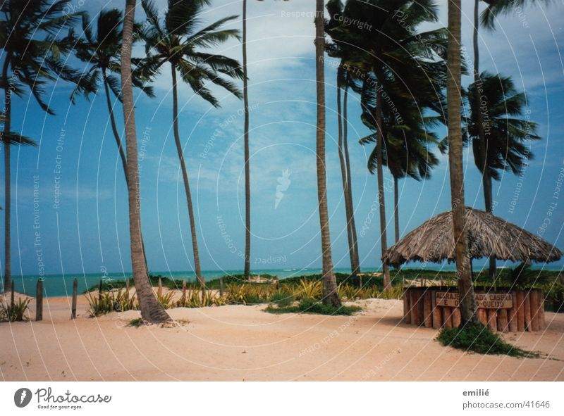 5.30am Beach Palm tree Ocean Clouds Bar Caipirinha Brazil South America Sky Sand Beach dune Maceio Far-off places