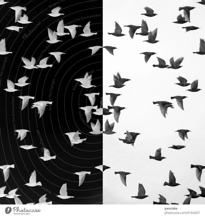 objektiv | negativ & positiv Belichtung Film analog Vogel Vogelschwarm Star Photo Entwicklung Spiegelung schwarz weiß Umkehrung
