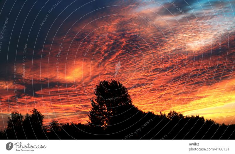 Background radiation Exterior shot Colour photo Deserted Dawn Sunrise Sunlight Panorama (View) Low-key Silhouette Morning Beautiful weather Horizon Clouds Sky