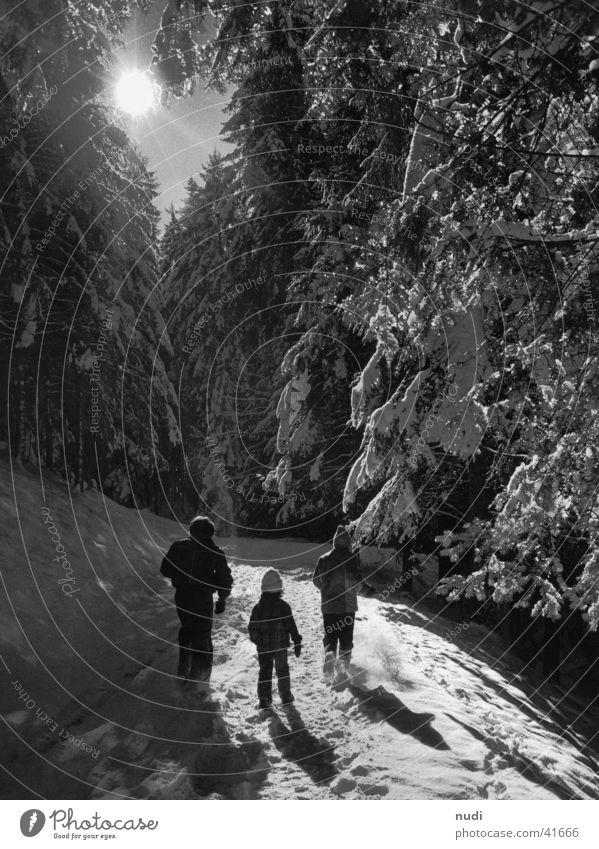 Winter wonderland Forest Fir tree Light Snow Sun Human being Shadow Walking To go for a walk