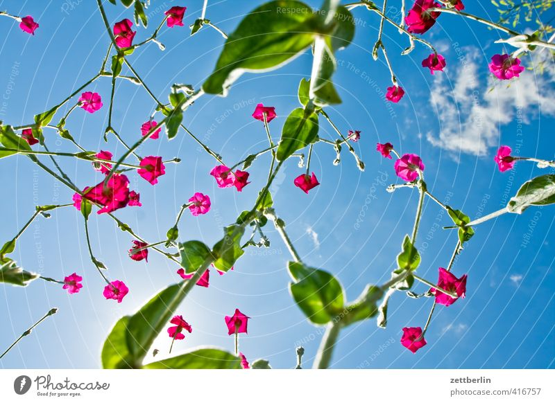 Sky Beautiful Plant Summer Sun Relaxation Flower Joy Leaf Emotions Blossom Happy Garden Contentment Happiness Joie de vivre (Vitality)
