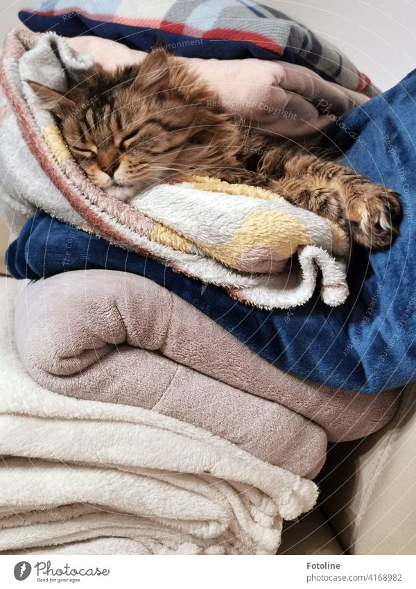 Cats just know how to live. This one loves to snuggle through and under blankets. Pelt Animal Pet Domestic cat Paw Mammal Cute Lie Cuddly Whisker Cat's head