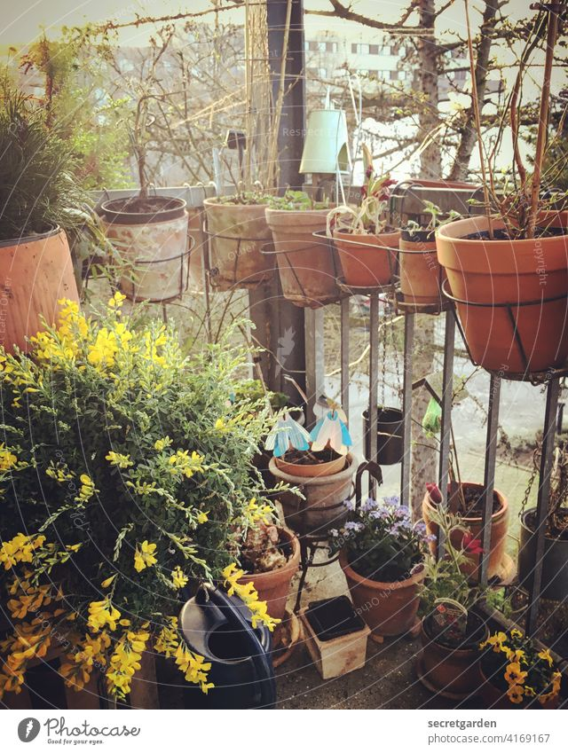 In flow Clay pot Spring fever Summer's day Terracotta eager Summery Summerflower sow Bird's-eye view hotchpotch Blossoming Narrow Claustrophobia Garden plot