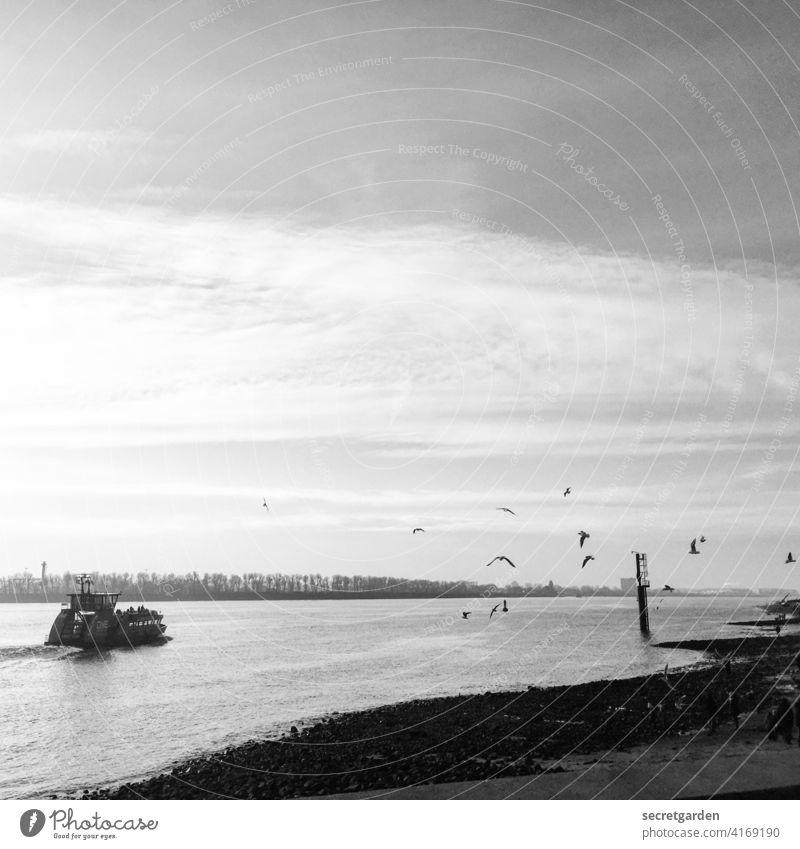 Oh how beautiful is Panama! Hamburg Ferry Trip Airstream Seagull Black & white photo Elbe Water Navigation Exterior shot River Moody nostalgic Port of Hamburg