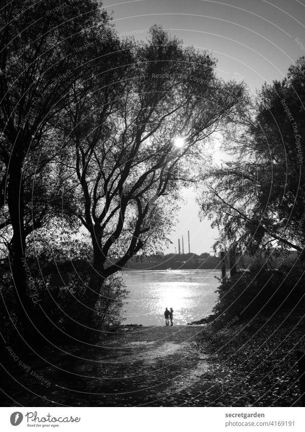 Hugging in the frame. Romance romantic Black & white photo couple Couple Park Elbe Hamburg Sunlight Reflection Water bank Exterior shot River Horizon Sky