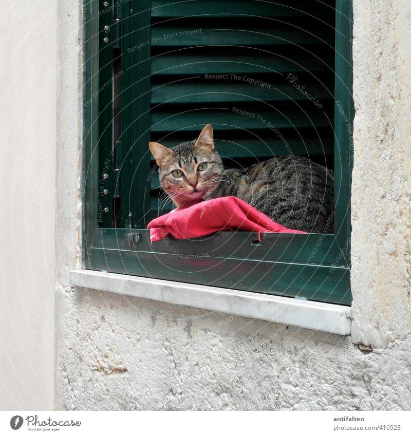Lisbon cat Town House (Residential Structure) Wall (barrier) Wall (building) Facade Window Window board Window frame Windowsill Window seat Venetian blinds