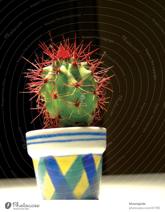 Green Plant Red Small Punk Pot Cactus Thorn Thorny