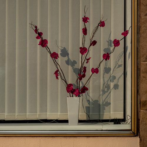 Plastic flowers with electric lighting in a bleak office window Artificial flowers plastic flowers Office window Decoration Colour photo Kitsch Old fashioned