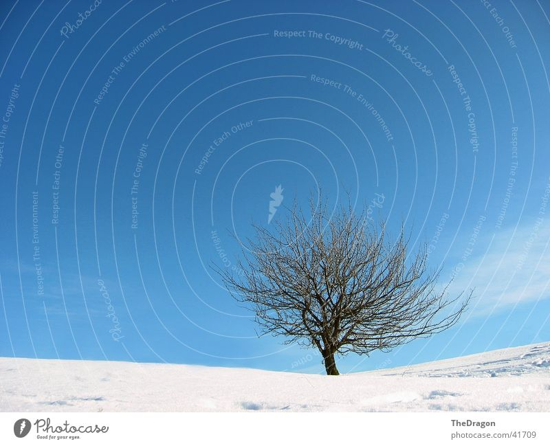 Winter tree - winter tree Tree Wide angle White Plain Snowscape Cold Calm Relaxation Sky Blue Landscape Far-off places sky. blue silence
