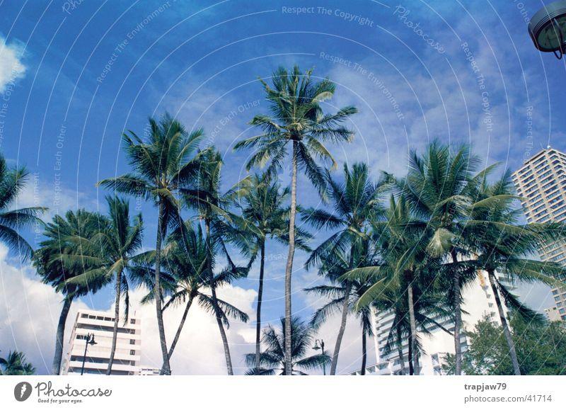 Sky Tree City Vacation & Travel Relaxation Palm tree Hawaii