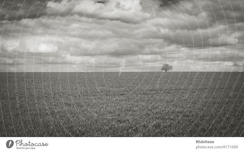 Minimalism ... a lonely tree with clouds overcast sky minimalism Minimalistic Sky Tree Sky Exterior shot Deserted Day Nature Calm Black & white photo Clouds