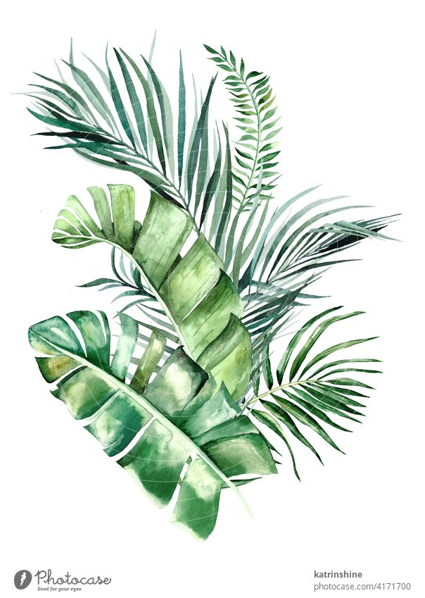 Watercolor tropical leaves bouquet illustration watercolor green Drawing monstera palm banana fern foliage geometric Botanical Leaf Hand drawn Ornament Plant