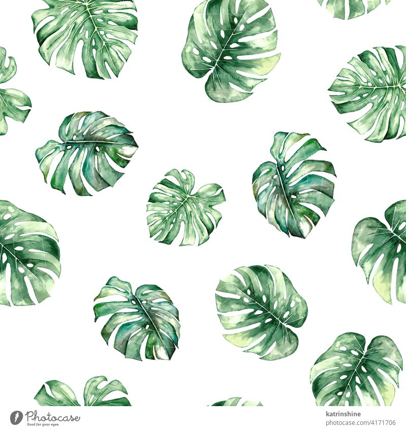 Watercolor monstera tropical leaves seamles pattern watercolor green seamless Drawing illustration jungle paper Botanical Leaf exotic Hand drawn Ornament Plant