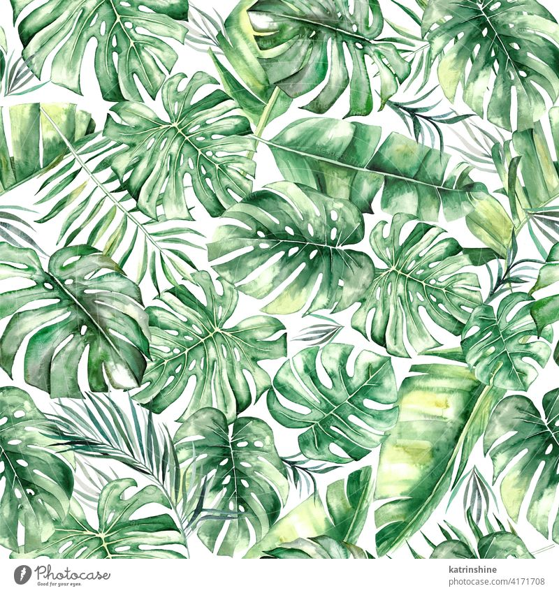 Watercolor tropical leaves seamles pattern watercolor green seamless monstera palm fern banana Drawing illustration jungle paper Botanical Leaf exotic