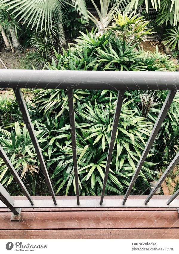 Balcony in the tropics Summer Terrace Green plants Palm tree green Garden Tropical tropical climate natural Nature leaf exotic jungle palm flora botanical