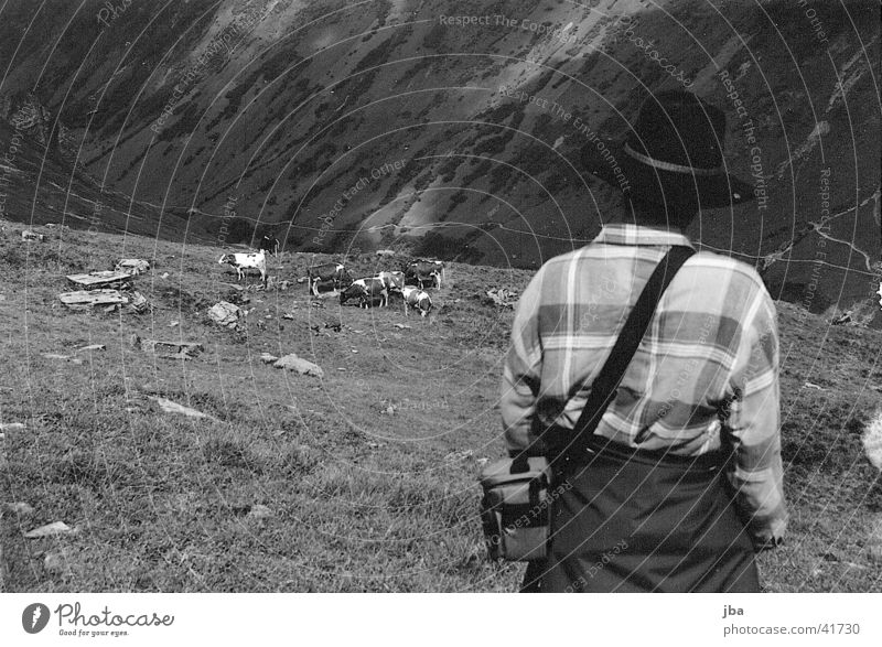 Mountain farmer_3 Cattle Loneliness Farmer Alpine pasture Landscape