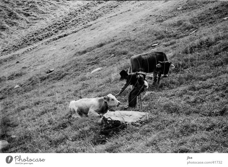 Mountain farmer_1 Cattle Loneliness Farmer Alpine pasture Landscape