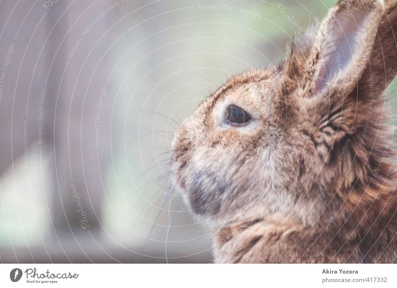 breathing air Animal Pet Animal face 1 Breathe Observe Discover Cuddly Cute Soft Brown Gray Green Orange Black White Attentive Nature Hare & Rabbit & Bunny Pelt