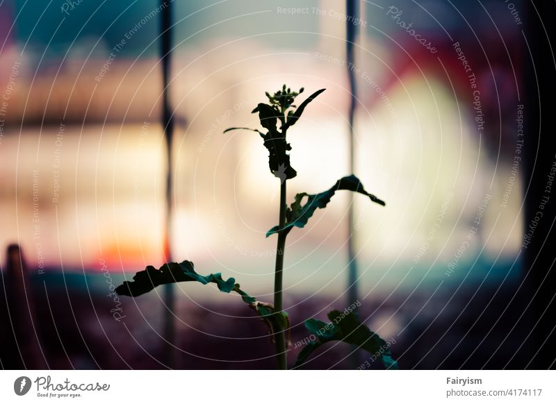 urban growth blooming spring flower come into bloom Neutral Background Natural color Spring Spring day Garden daylight Colour photo Aesthetics minimalism