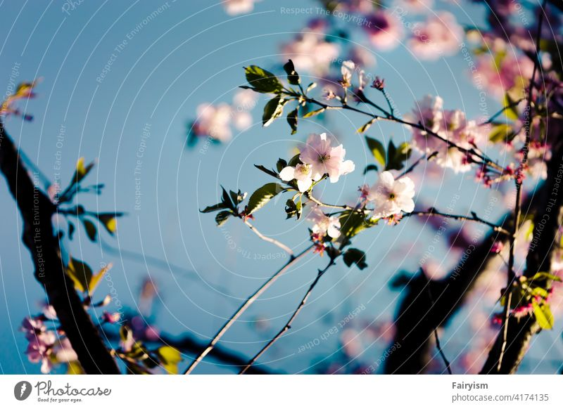 first flowers of spring Spring colours Photography spring garden Aesthetics minimalist spring flowers Near Nature spring feeling flowering flower Colour photo