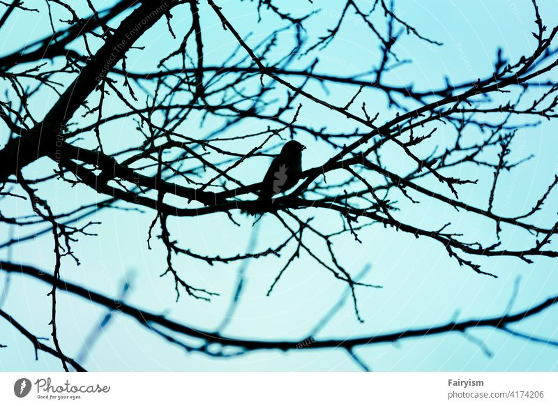 one lonely bird sitting on a tree Bird's-eye view birds birdwatching Smooth Natural color Copy Space Fine romantic Neutral Background Near blurriness Romance