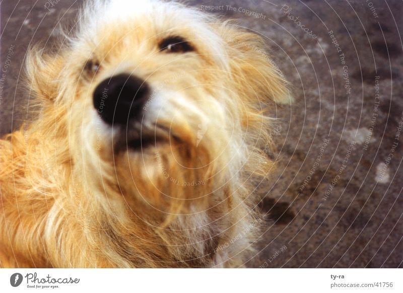 strays Dog Fuerteventura Animal Pelt Close-up