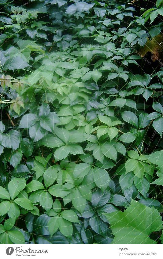 green Green Leaf Plant