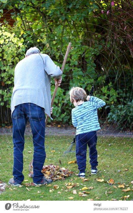 a great team - rear view of grandpa and grandson raking leaves in the garden Grandfather Grandchildren Child Toddler Rear view Team Garden foliage rake Autumn