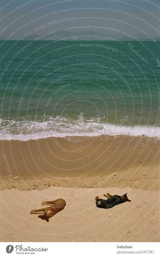 not to wake sleeping dogs! Dog Ocean Beach Waves Transport Sand Sun